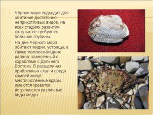 Чёрное море подходит для обитания достаточно неприхотливых видов, на всех ст