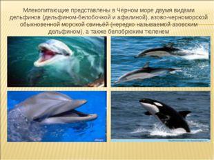 Млекопитающие представлены в Чёрном море двумя видами дельфинов (дельфином-бе
