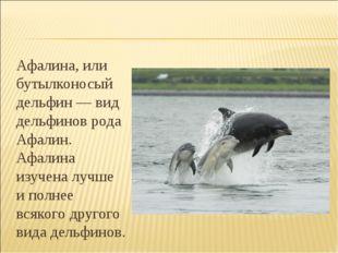 Афалина, или бутылконосый дельфин — вид дельфинов рода Афалин. Афалина изуче