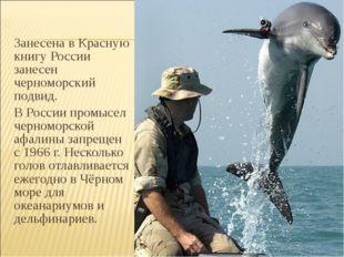 Занесена в Красную книгу России занесен черноморский подвид. В России промыс