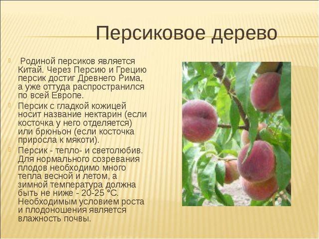 Персиковое дерево Родиной персиков является Китай. Через Персию и Грецию пер...