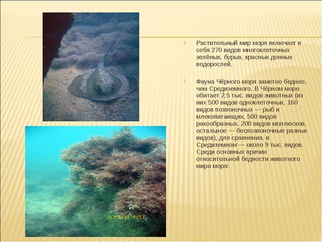 Растительный мир моря включает в себя 270 видов многоклеточных зелёных, бурых...