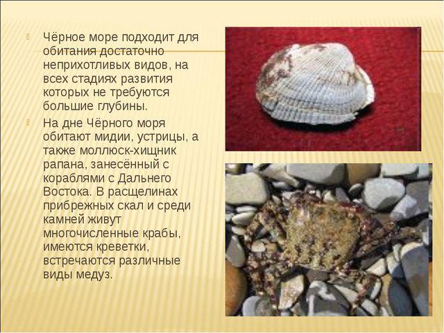 Чёрное море подходит для обитания достаточно неприхотливых видов, на всех ст...