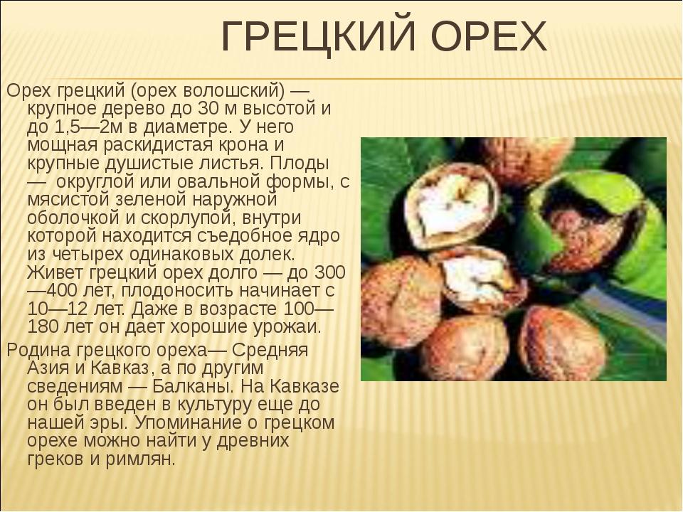 ГРЕЦКИЙ ОРЕХ Орех грецкий (орех волошский) — крупное дерево до 30 м высотой...
