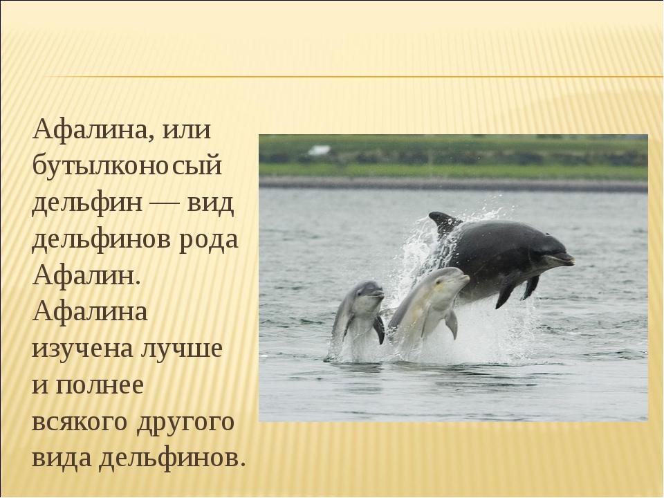 Афалина, или бутылконосый дельфин — вид дельфинов рода Афалин. Афалина изуче...