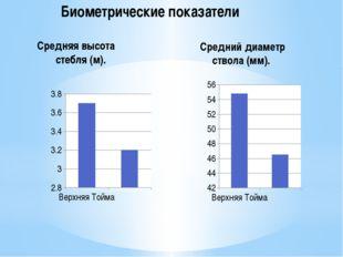 Биометрические показатели Средняя высота стебля (м). Средний диаметр ствола