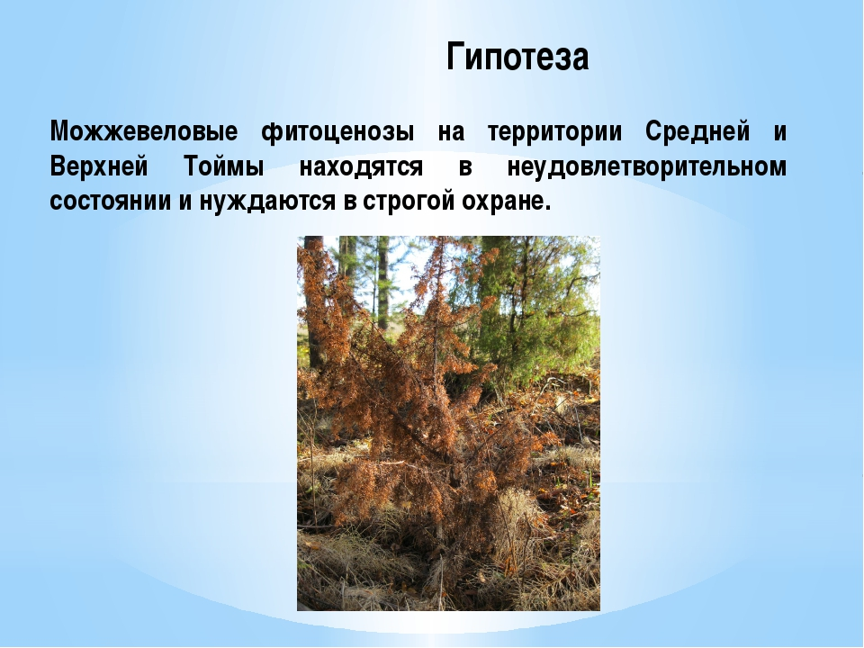 Гипотеза Можжевеловые фитоценозы на территории Средней и Верхней Тоймы наход...