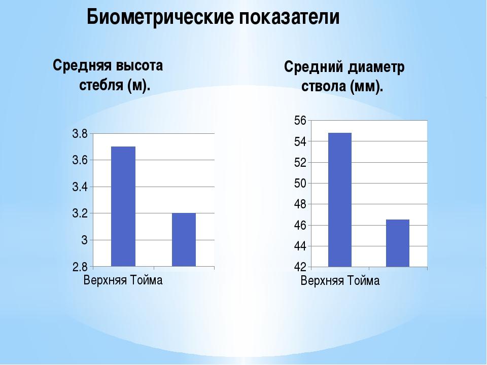 Биометрические показатели Средняя высота стебля (м). Средний диаметр ствола...