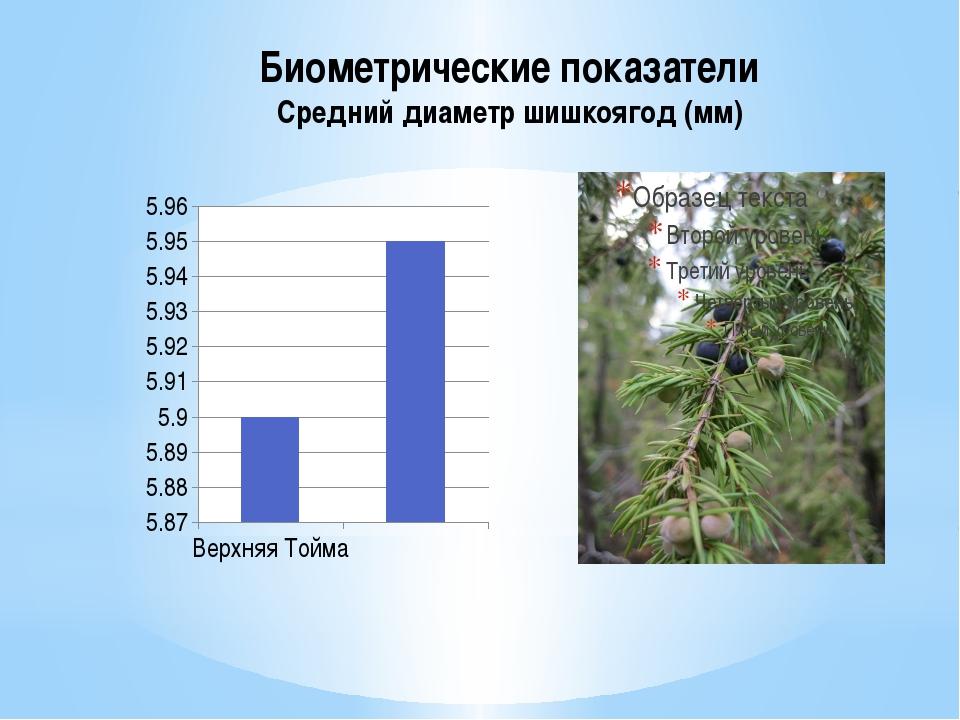 Биометрические показатели Средний диаметр шишкоягод (мм)