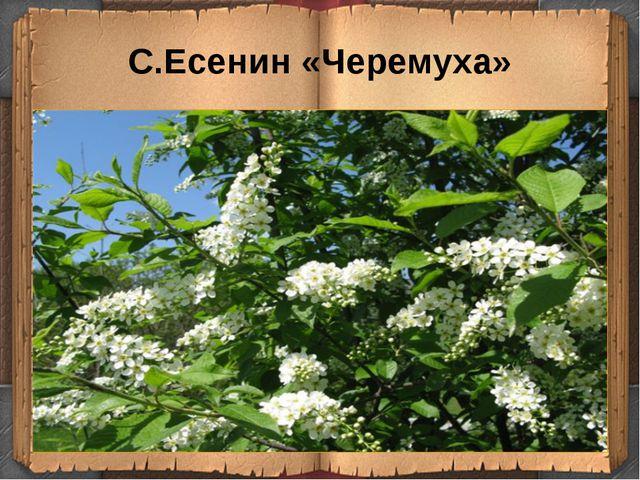 С.Есенин «Черемуха»