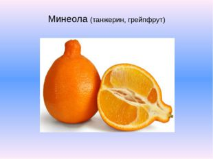 Минеола (танжерин, грейпфрут)
