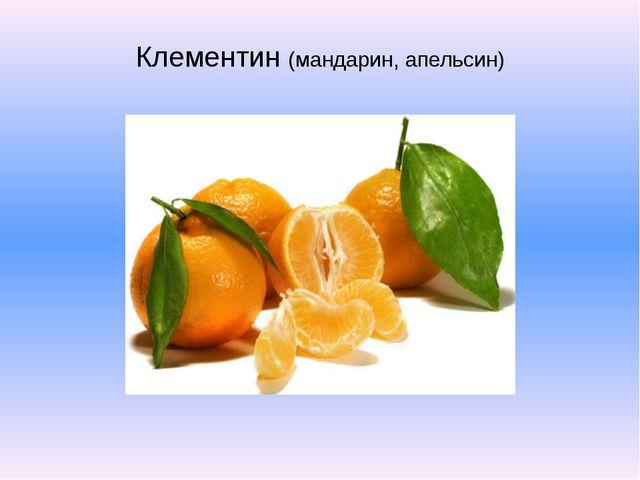 Клементин (мандарин, апельсин)