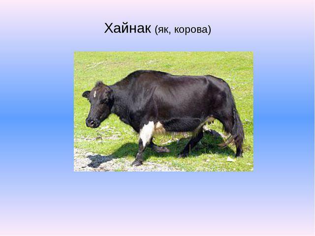 Хайнак (як, корова)