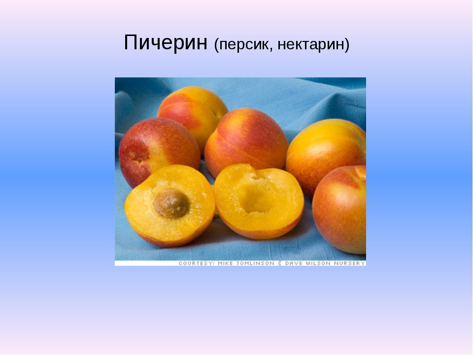 Пичерин (персик, нектарин)