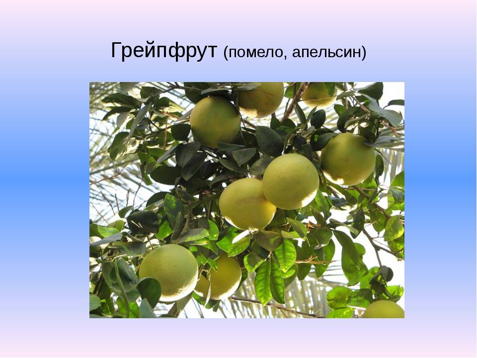 Грейпфрут (помело, апельсин)