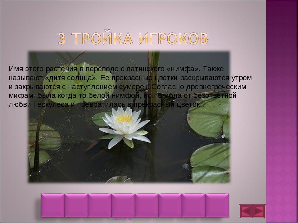 Имя этого растения в переводе с латинского «нимфа». Также называют «дитя солн...