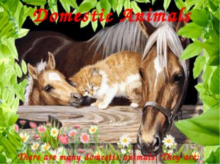 Domestic Animals There are many domestic animals. They are: