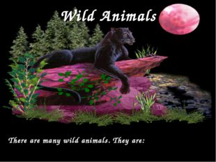 Wild Animals There are many wild animals. They are: