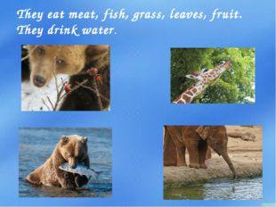 They eat meat, fish, grass, leaves, fruit. They drink water.