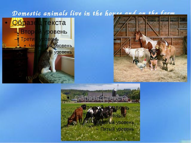 Domestic animals live in the house and on the farm.