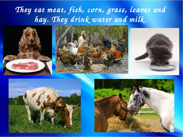 They eat meat, fish, corn, grass, leaves and hay. They drink water and milk.