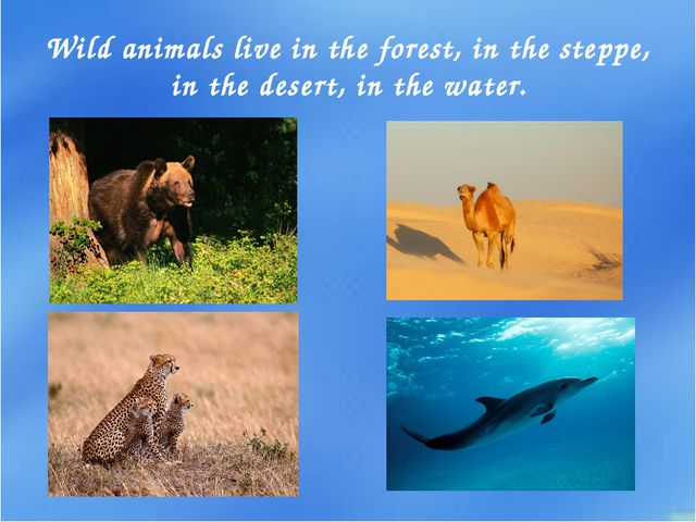 Wild animals live in the forest, in the steppe, in the desert, in the water.