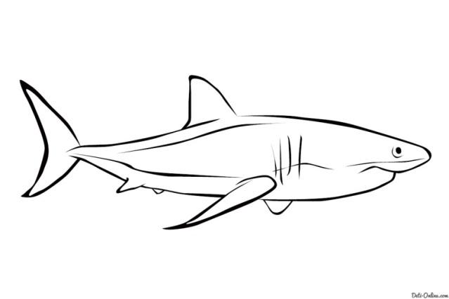 Раскраска Акула Раскраски Рыбы