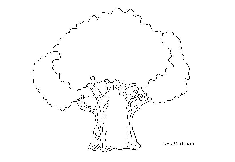 дуб растровая раскраска