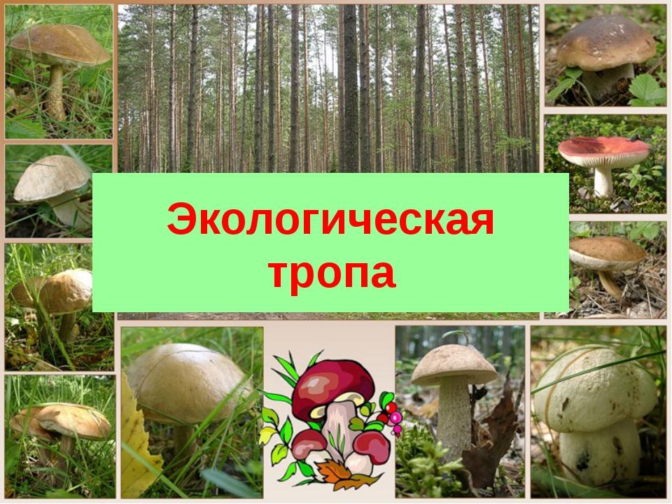 Экологическая тропа