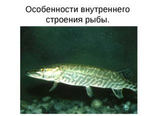 Особенности внутреннего строения рыбы.