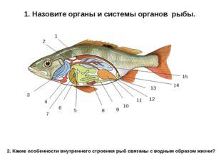 1. Назовите органы и системы органов рыбы. 1 2 3 4 5 6 7 8 9 10 11 13 12 14 1