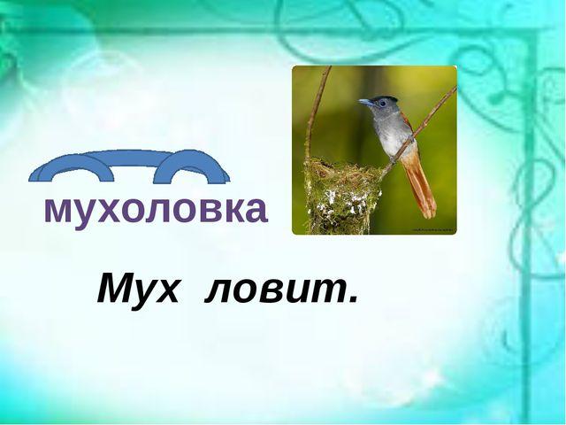 мухоловка Мух ловит.