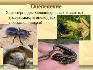 Оцепенение Характерно для холоднокровных животных (насекомых, земноводных, пр