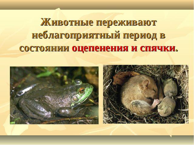 Животные переживают неблагоприятный период в состоянии оцепенения и спячки.