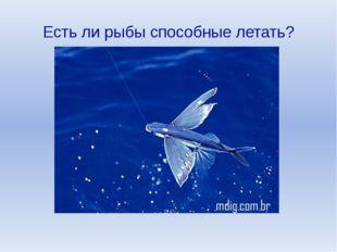 Есть ли рыбы способные летать?