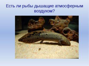 Есть ли рыбы дышащие атмосферным воздухом?