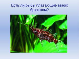 Есть ли рыбы плавающие вверх брюшком?