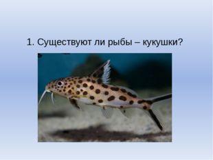 1. Существуют ли рыбы – кукушки?