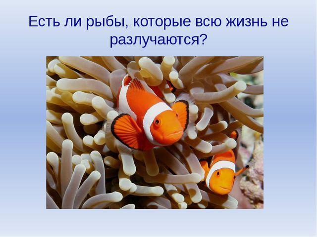 Есть ли рыбы, которые всю жизнь не разлучаются?