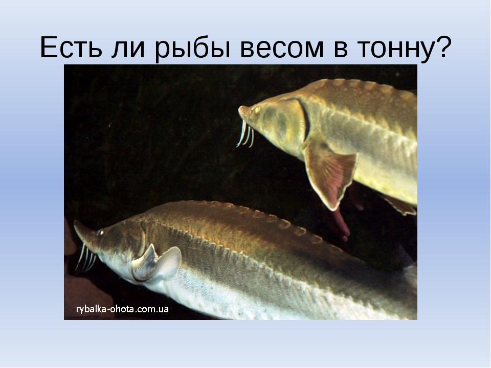 Есть ли рыбы весом в тонну?