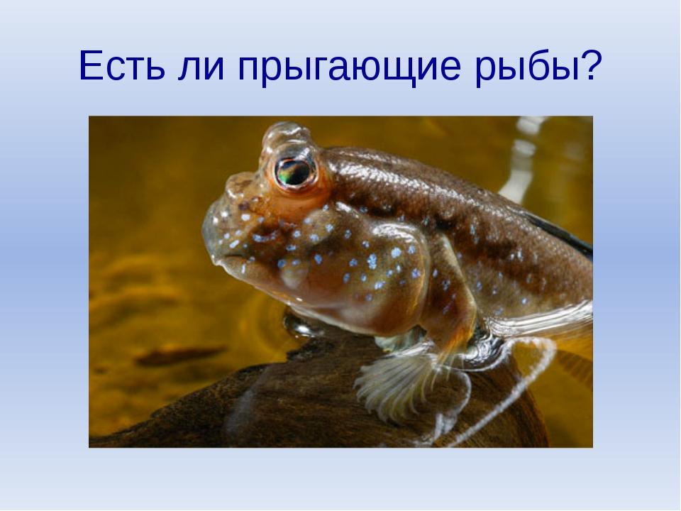 Есть ли прыгающие рыбы?