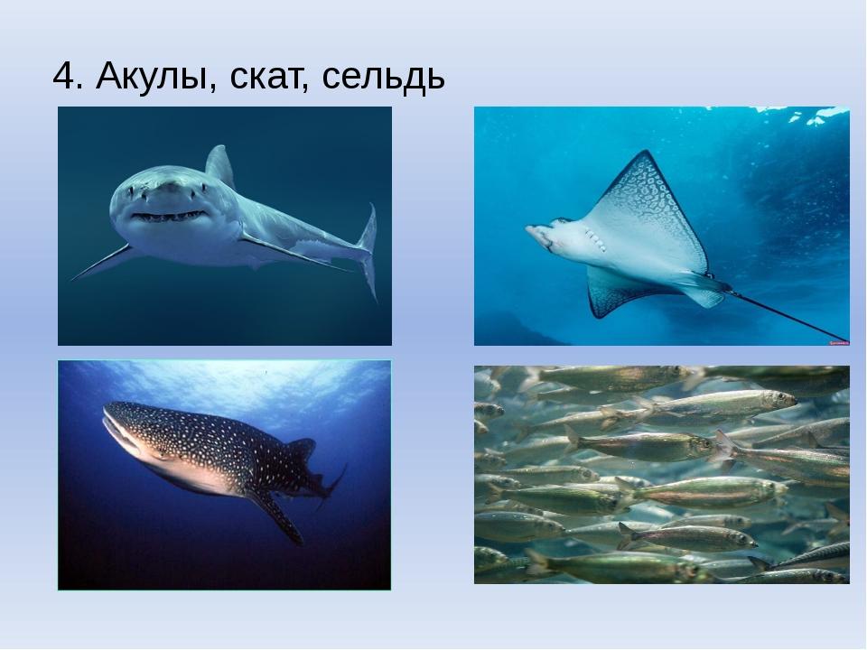 4.Акулы, скат, сельдь