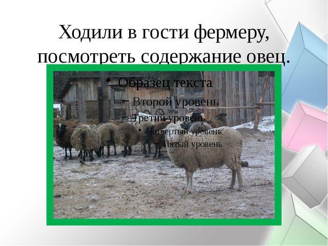 Ходили в гости фермеру, посмотреть содержание овец.
