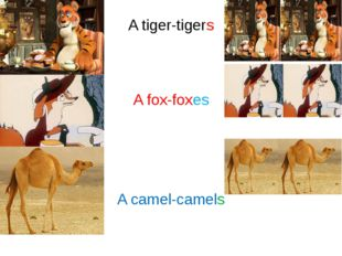 A tiger-tigers A fox-foxes A camel-camels