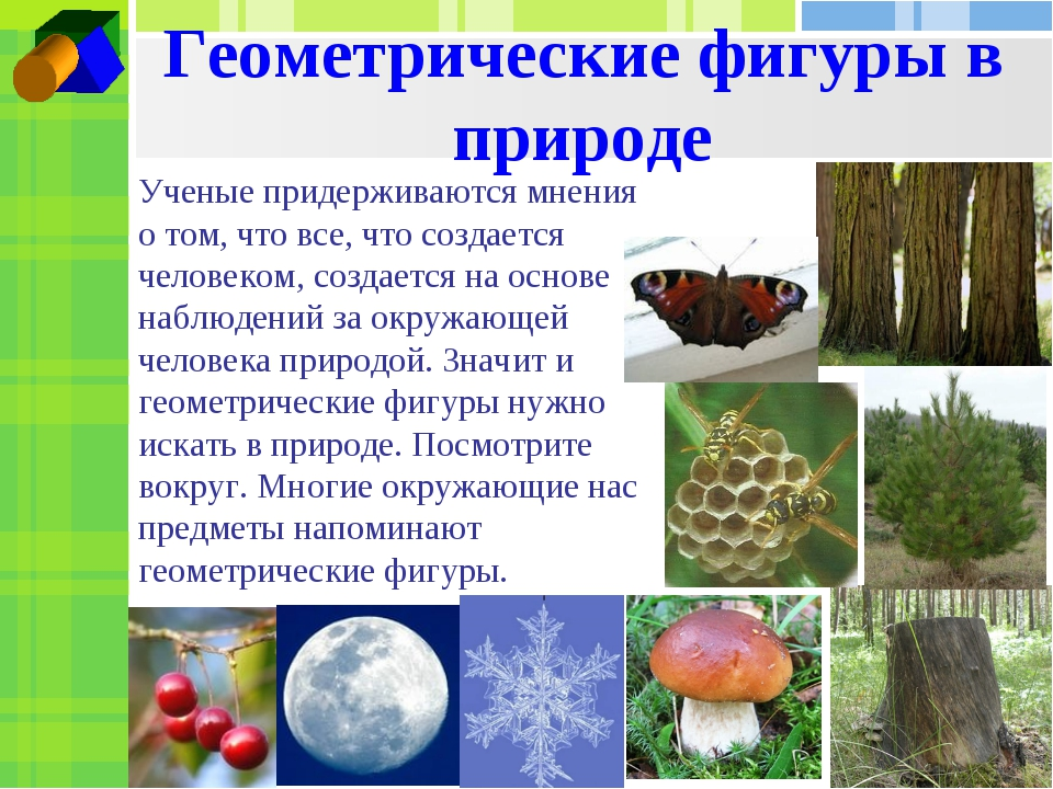 Геометрические фигуры в природе Ученые придерживаются мнения о том, что все,...