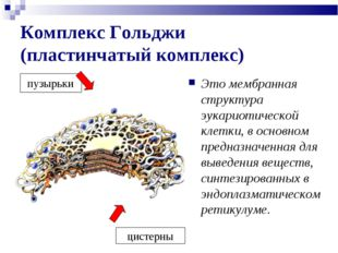 Комплекс Гольджи (пластинчатый комплекс) Это мембранная структура эукариотиче