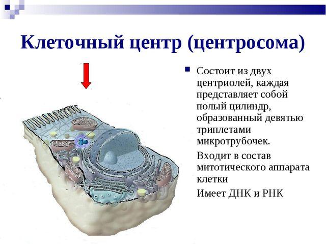 Клеточный центр (центросома) Состоит из двух центриолей, каждая представляет...