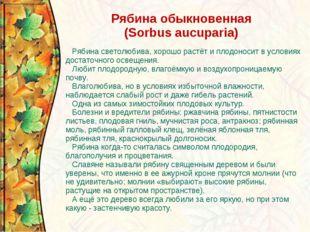 Рябина обыкновенная (Sorbus aucuparia) Рябина светолюбива, хорошо растёт и пл