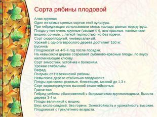 Сорта рябины плодовой Алая крупная Один из самых ценных сортов этой культуры.