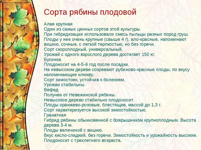 Сорта рябины плодовой Алая крупная Один из самых ценных сортов этой культуры....